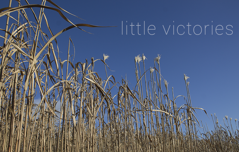 Little Victories | January 2017